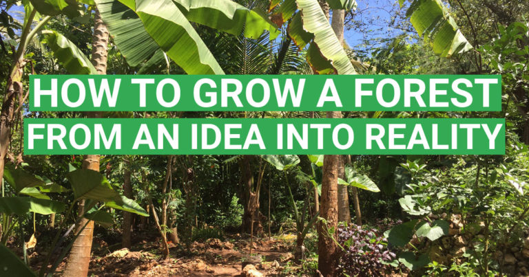 How to Grow a Forest From an Idea Into Reality
