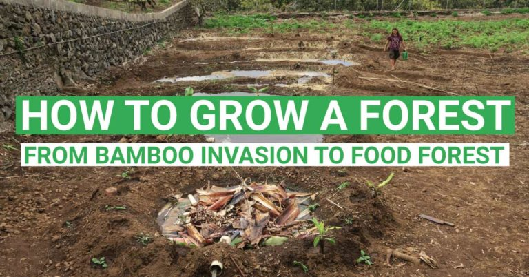 How to Grow a Forest – Update From Bamboo Invasion to Food Forest